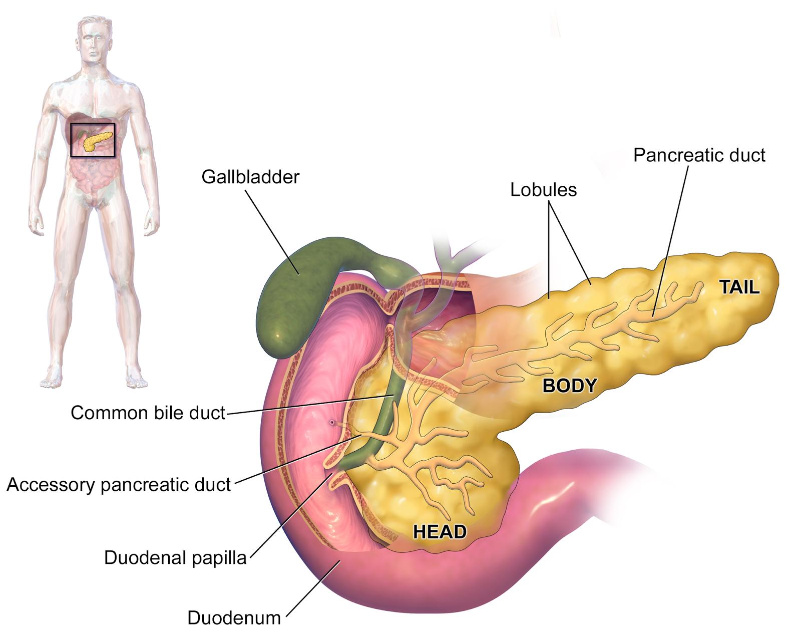 Tumores de páncreas, periampulares, y diferenciales. - AnSRo
