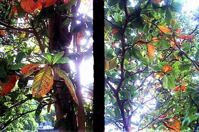 Canon Autoboy Tele 6, Half-Frame Image 04