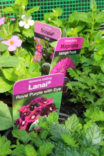 http://www.lifeofpottering.co.uk/2014/05/the-hanging-baskets.html