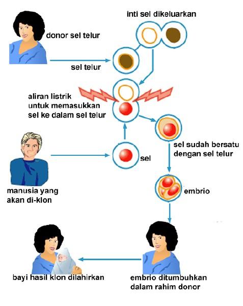 Kloning Embrio : kloning, embrio, Dharwanto,, Bandengan, Pekalongan:, KLONING, DALAM, PERSPEKTIF, HUKUM, ISLAM