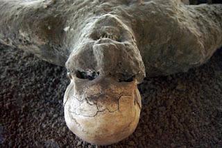 Taş Kesilen Şehir Pompei Sapkınları ve Felaketi