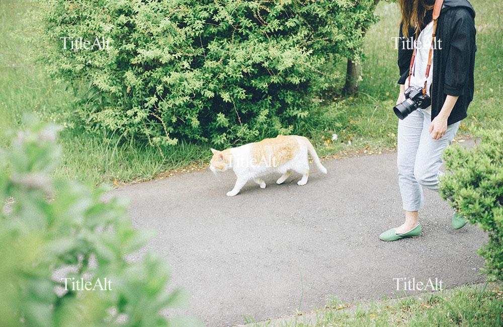 竹山団地にいた猫の写真