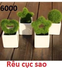 Phu kien hoa pha le o Xuan Phuong