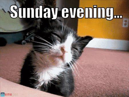 funny cat Sunday memes