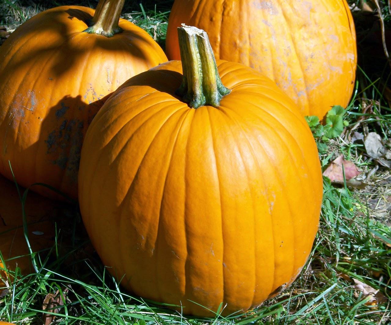 TAG Fall Favorite Things (Ce que je préfère en automne) halloween