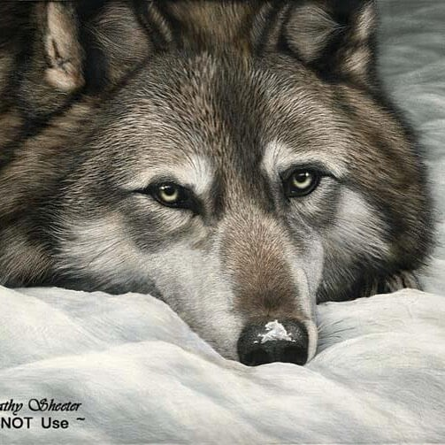 10-Wolf-Cathy-Sheeter-Wildlife-Scratchboard-Drawings-www-designstack-co