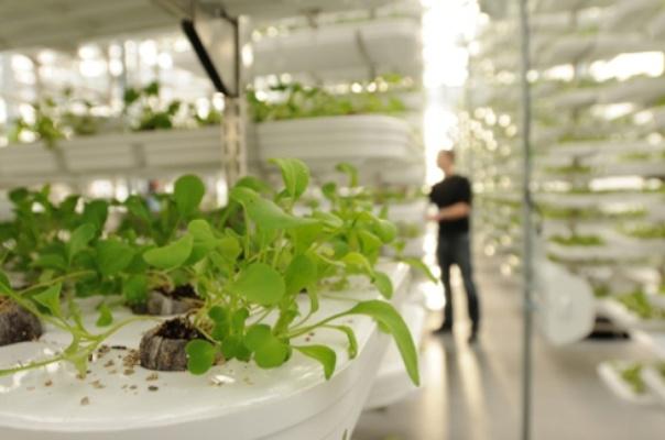 La cara oculta de los cultivos verticales ecosiglos for Cultivos verticales definicion