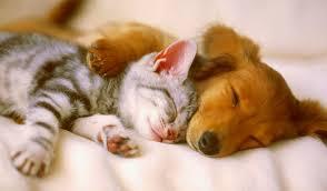 0e15f0f71 FALANDO DE VIDA!!: Como tirar pelos de cães e gatos de roupas ...
