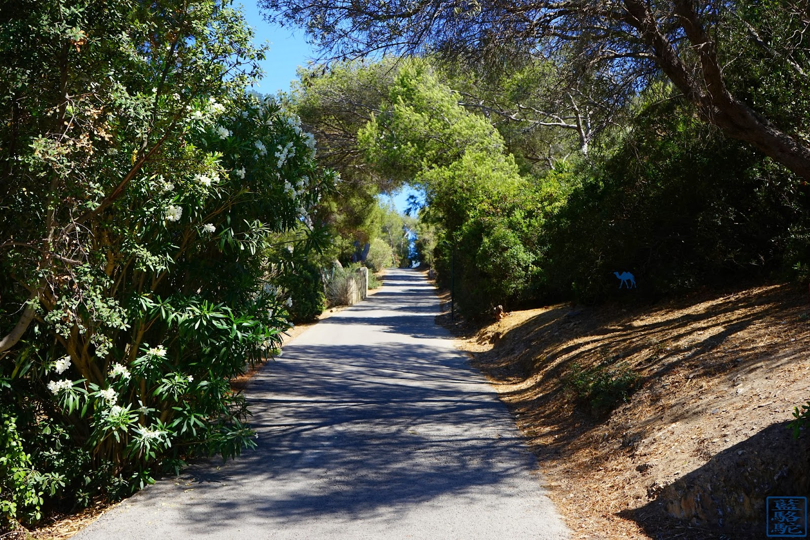 Le Chameau Bleu - Chemin  sur  l'ile des Embiez - Var  Méditérannée
