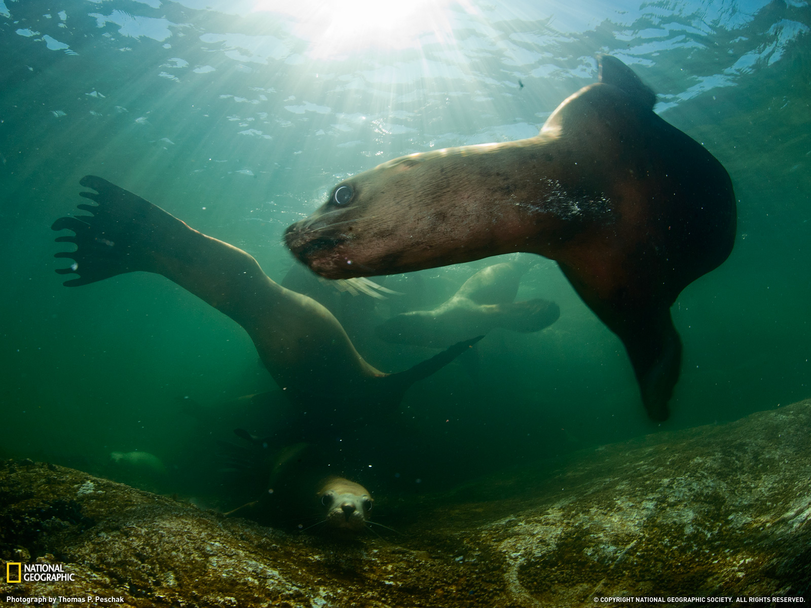 Photo Of The Day: National Geographic Photo Of The Day (August 2011