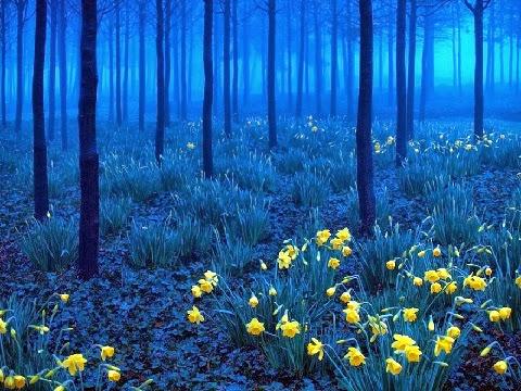 Fekete erdő, Németország