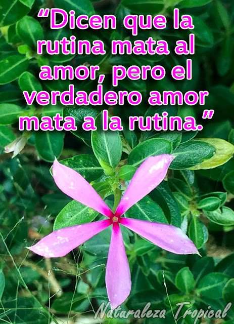 Dicen que la rutina mata al amor, pero el verdadero amor mata a la rutina.