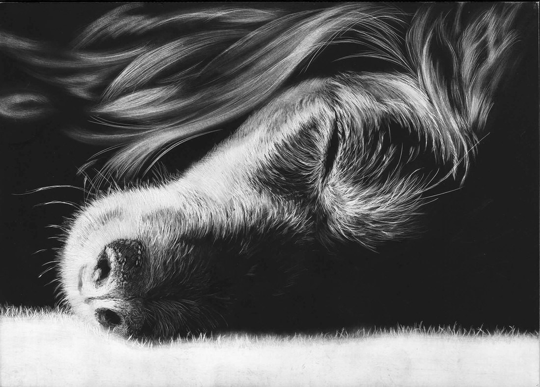 02-Dog-Allan-Ace-Adams-Scratchboard-Drawings-of-Wild-Animals-www-designstack-co