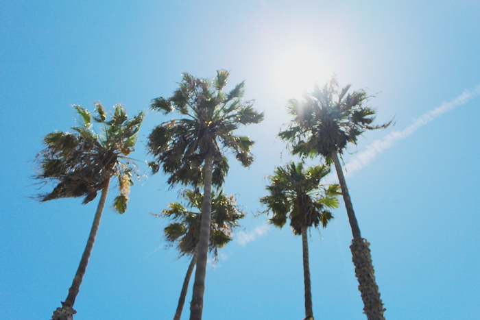 California Palm Trees