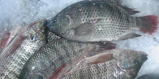 Hal Yang Tak Boleh Dilakukan Saat Memasak Ikan