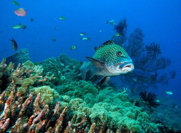 Biota laut Gili Trawangan