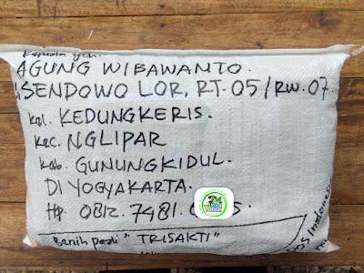 Benih pesana    AGUNG W Gunungkidul, DI Yogyakarta.   (Sesudah Packing)