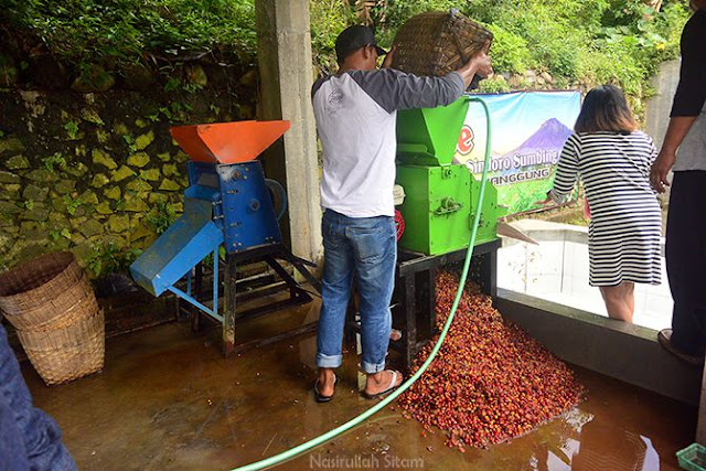 Proses memisahkan kulit dan biji kopi