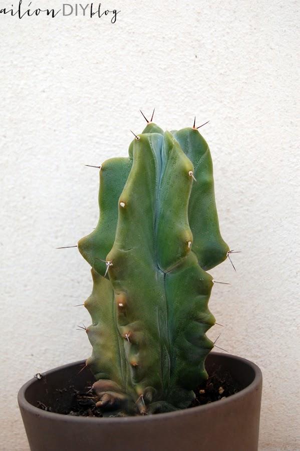 planta facil cuidar aloe