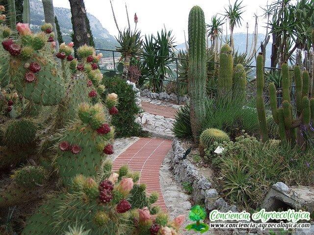 jardín adornado con cactus y otras suculentas