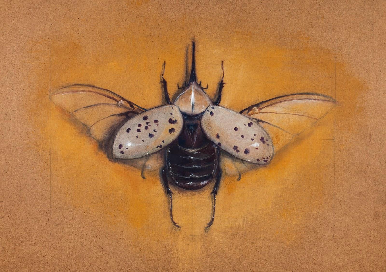 Escarabajo Hércules - Miguel Ángel Romero Sevilla