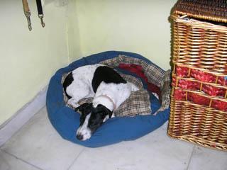 εκπαιδευση σκυλων σπιτι