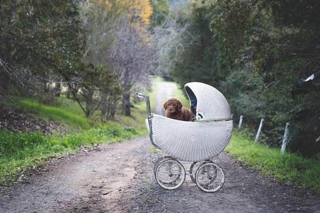 ensaio de fotos de casal com cachorro