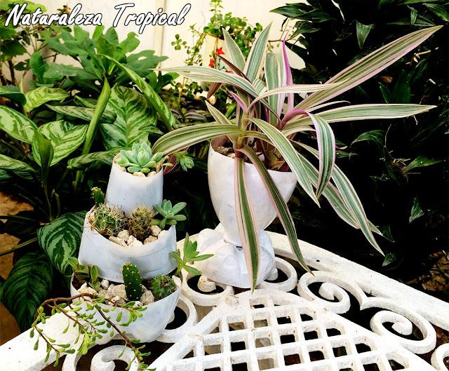 Mini-jardín de suculentas y copa vegetal en nuestro jardín
