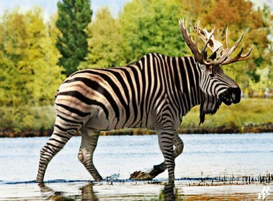 05-Moose-and-Zebra-Rob-Westdorp-www-designstack-co