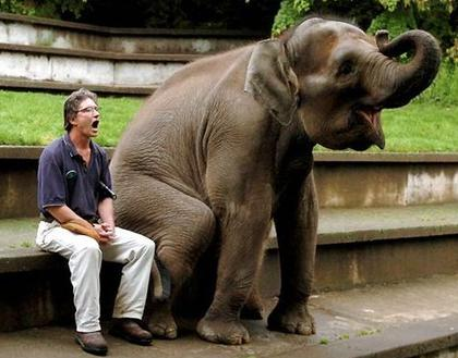 Man sitting with elephant