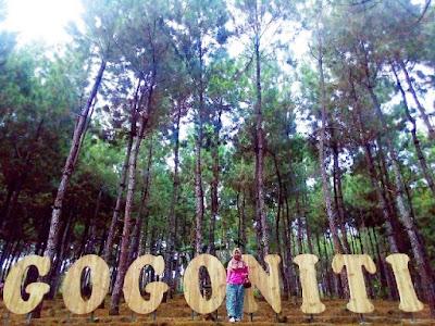 Hutan Pinus Gogoniti Blitar