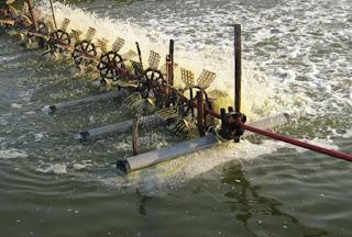 kadar oksigen terlarut didalamnya apakah sudah sesuai dengan kebutuhan ikan. Kadar oksigen terlarut juga menjadi salah satu parameter dalam menentukan kualitas air.