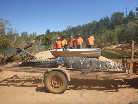 Crocodilo gigante Australia - Img 1