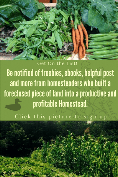 Get On The Homesteaders Journey list for Freebies, recipes, realistic homesteading advice and more