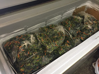 おみ漬けを冷凍庫に保管。
