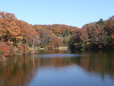 12月の白旗池 紅葉