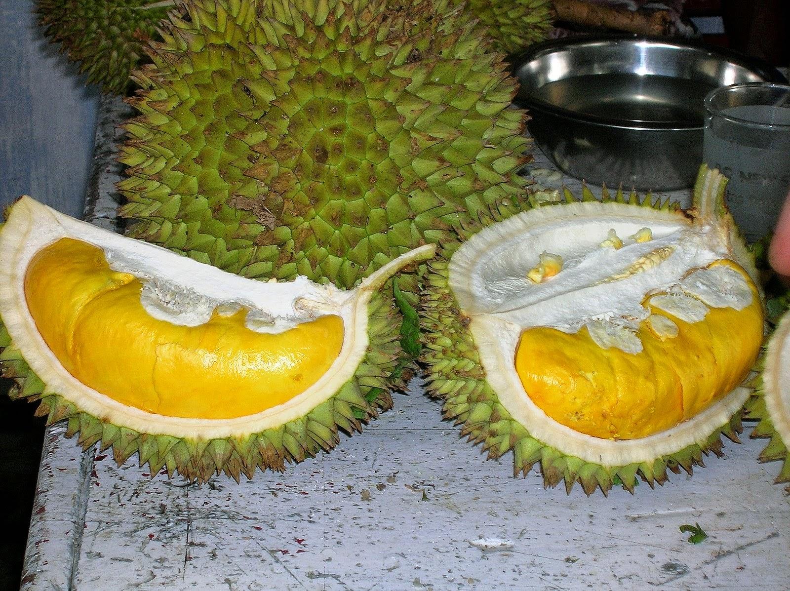 Hampir dapat di pastikan sebagian besar masyarakat indonesia pastilah mengenal buah yang s 7 Manfaat Buah Durian Untuk Kesehatan Yang Harus Kamu Tau