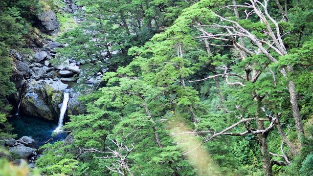 〖合歡溪步道〗中高海拔植物