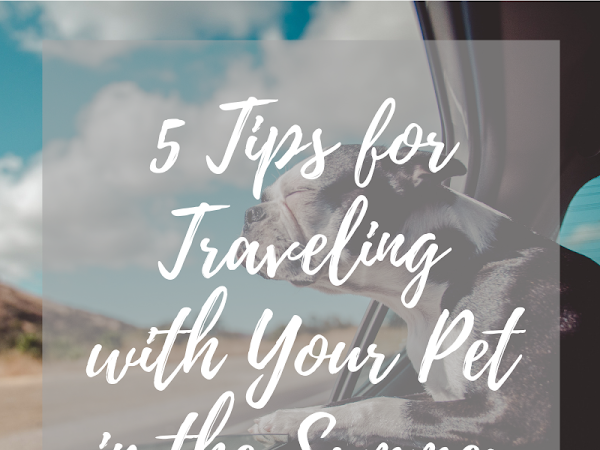 5 Tips for Traveling with Your Pet in the Summer
