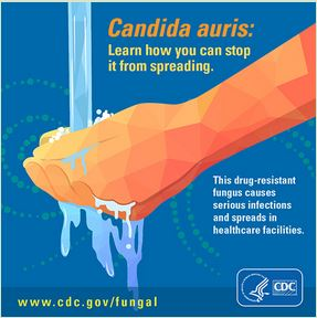 Avian Flu Diary CDC Update Candida Auris August - Map of us candida auris infections