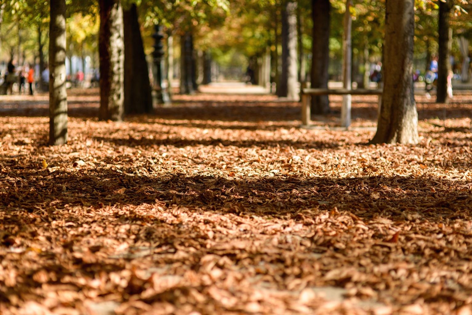 feuilles automne tuileries