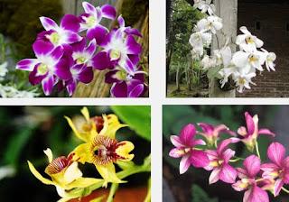 Arti Mimpi Bunga Anggrek
