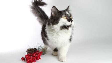 Kitten 1920x1080 HD