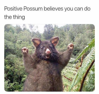 Funny Positive Possum believes you can do the thing Meme Picture
