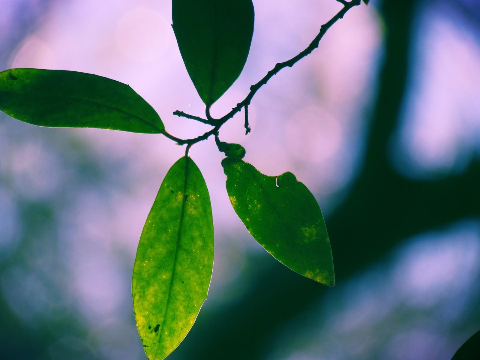 Green Leaf Macro Photography Lens Eternal Nature