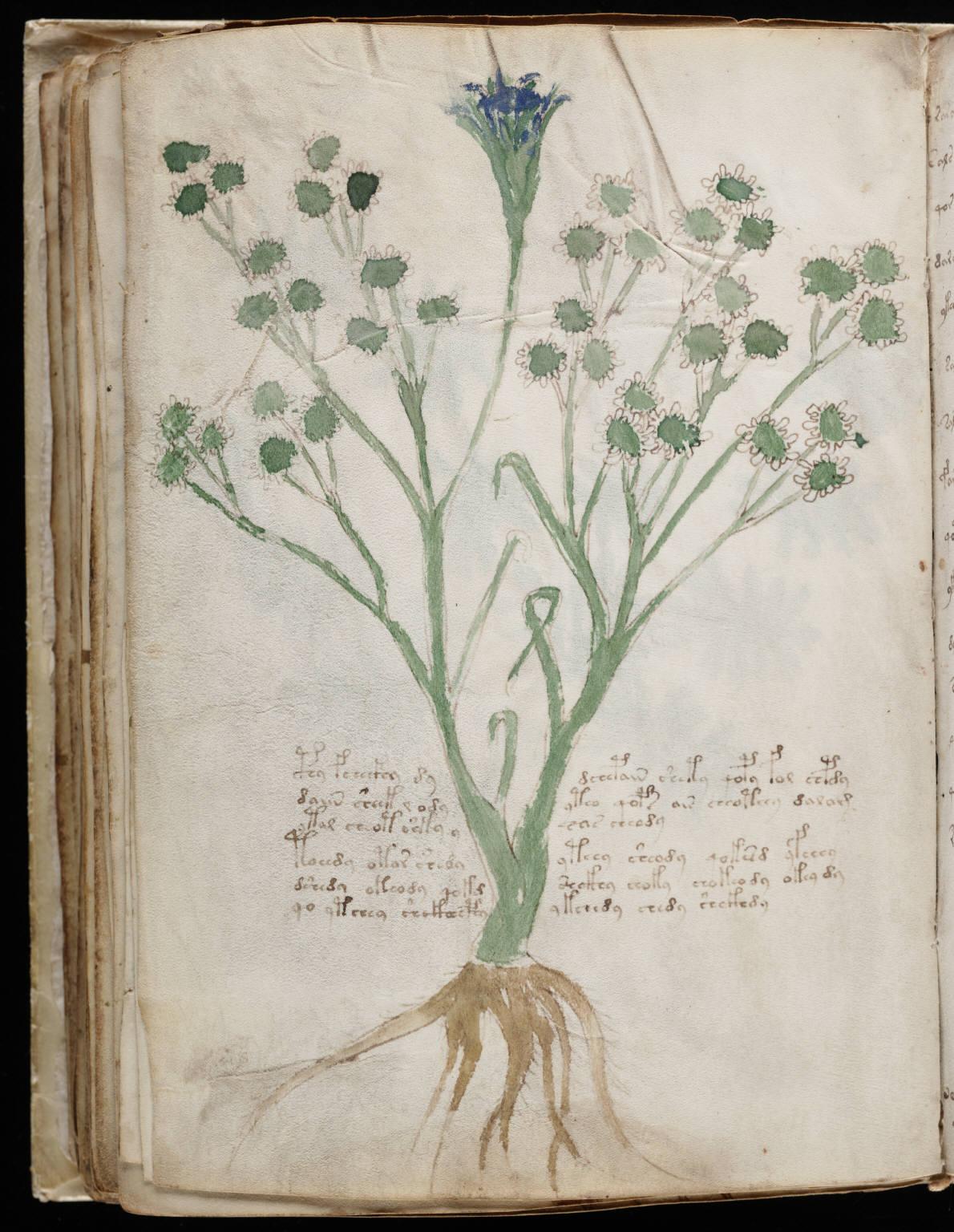 manuscrito116