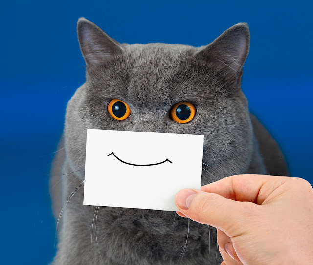 Gray cat with a happy face. Photo via Adobe Stock.