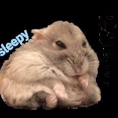 hamster Bon