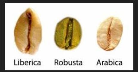 Exitox Green Coffee Bean