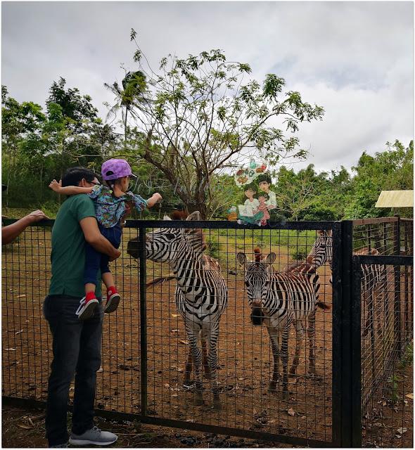Yoki's Farm Zebra